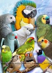 Приют попугаям,  о которых больше не могут заботиться их хозяева.