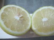 Лимоны ЮАР,  Апельсины ЮАР,  Мандарины ЮАР,  Грейпфрут ЮАР,  Яблоки ЮАР