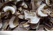 Белый гриб сушеный с Алтая