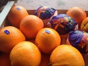 Свежие фрукты и овощи оптом