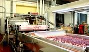 Фабрика производства замороженных ягод,  фруктов и овощей