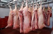 Свинина охлажденная оптом со склада в Москве