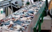 Линии производства рыбных консервов