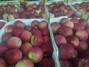 Яблоки сорта Айдаред оптом напрямую из садов Краснодарского края.
