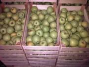 Яблоки сорта Голден оптом напрямую из садов Краснодарского края.