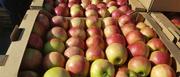 Яблоки оптом напрямую из садов Краснодарского края.
